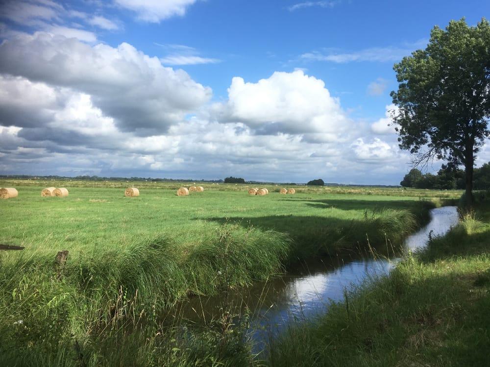 Grüne Wiese mit Fluss